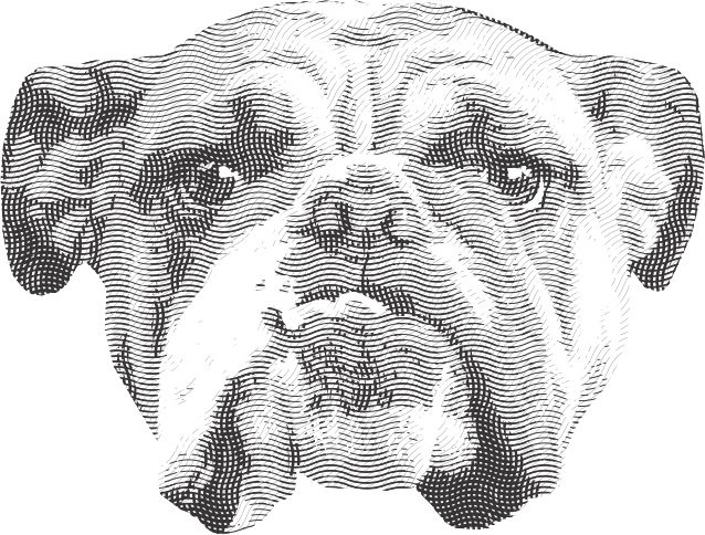 Vector Bulldog